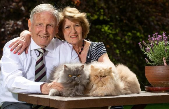 Couple who split over woman's love of cats remarry – despite her having 30 more