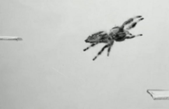 Scientists train a spider to jump on demand