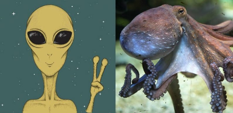 What Do Aliens Look Like? Probably Like Octopuses, Says Space Scientist Michio Kaku