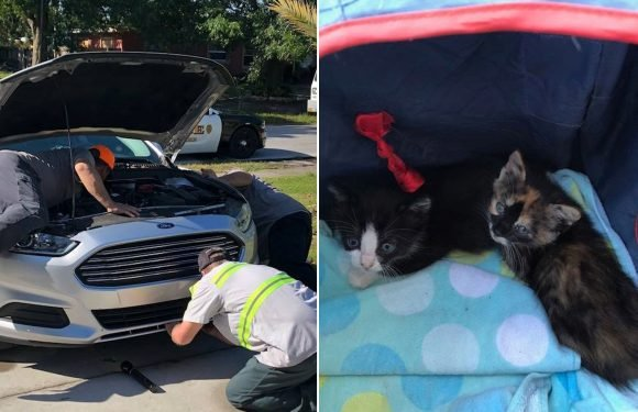 Good Samaritans free cute kittens stuck in detective's car