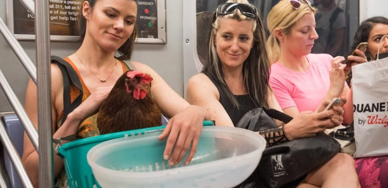 This model is an 'emotional support human' for her pet hen