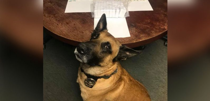 Police dog finds nearly 3,200 bags of heroin in traffic stop