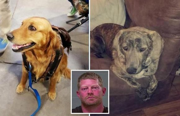 Twisted dad 'shot his teenage daughter's dogs dead as punishment for her not doing the dishes'