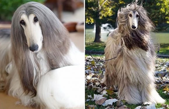 This is the world's most stylish dog… with a beauty regime costing a whopping £28,000!
