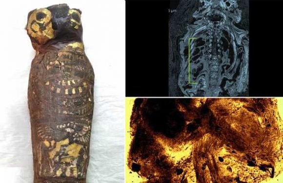 Egyptian mummy thought to be a hawk turns out to be malformed BABY