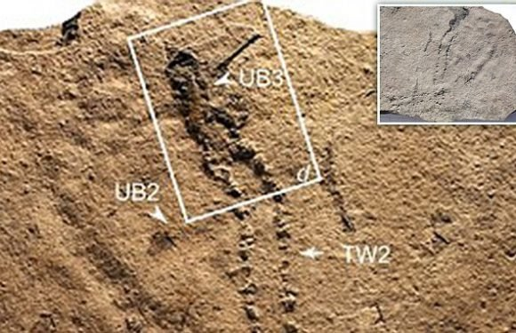 550 million-year-old tracks in China could be the oldest ever found