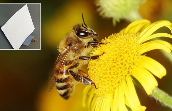 Bees can count! Stripy insects can be trained to understand numbers