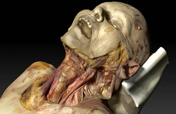 Virtual cadaver could help solve the medical shortage of dead bodies