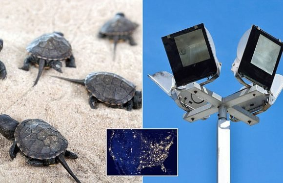 Modern LED lights are affecting wildlife 'as much as the midday sun'