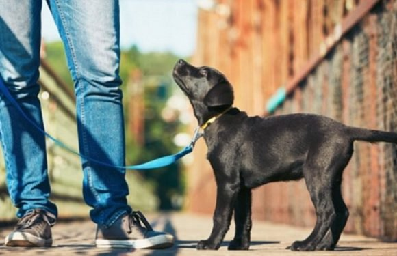 Puppies take cues from human companions when facing a scary object