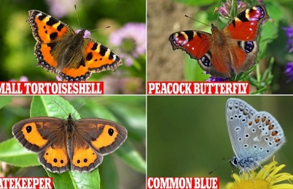 Butterfly numbers in the UK down by almost 60 per cent since 1990