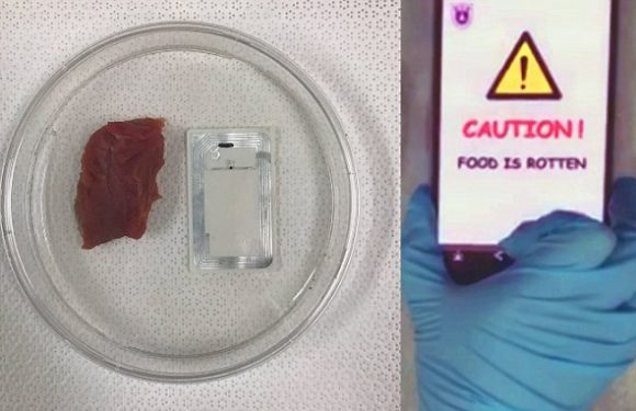 Device sends rotten food warning to smartphones