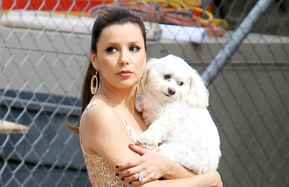 Eva Longoria's Dog Dies in Her Arms at Vet After Stroke