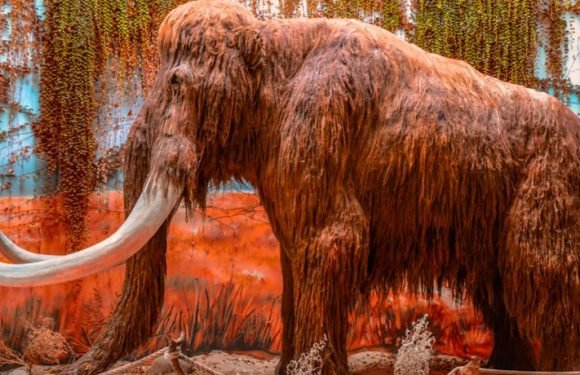 The First Woolly Mammoth Bone Ever Found In Scotland Discovered By Chance On Stranraer Beach