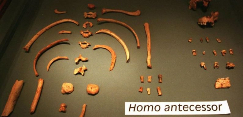 Scientists Date Homo Antecessor Remains And Conclude It Is The Oldest Fossil Ever Discovered In Western Europe