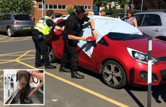 Moment police smash windows to save two dogs left in car so hot officers struggled to breathe