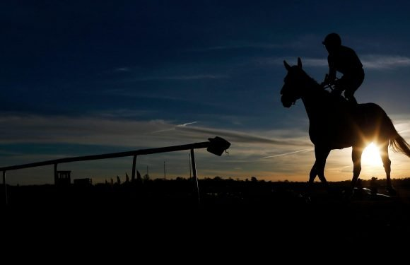 Unbeaten racehorse Walk In The Sun has tested positive for cocaine, according to reports