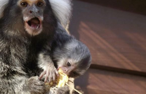 RSPCA issues warning as animals and primates are being sold on FACEBOOK