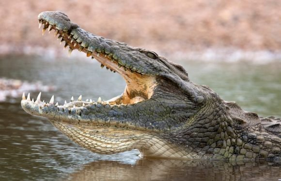 Crocodile 'leapt from water' and killed pastor during lake baptism