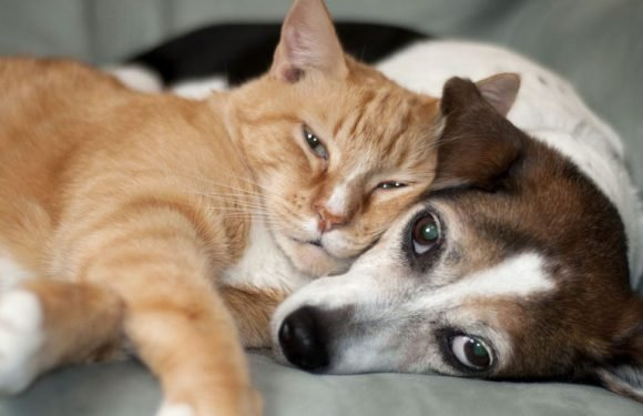 Dogs vs cats: Science reveals which one of our furry friends is the smartest
