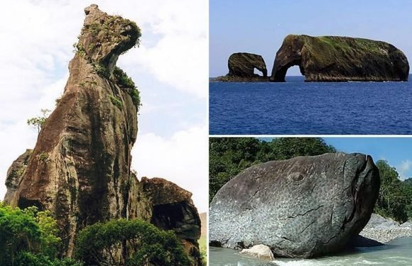 From mighty bears to majestic elephants … what animals do you see in these natural formations?
