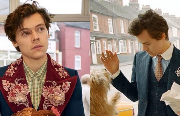 Harry Styles Posed with Puppies and a Chicken in His New Gucci Campaign Pictures