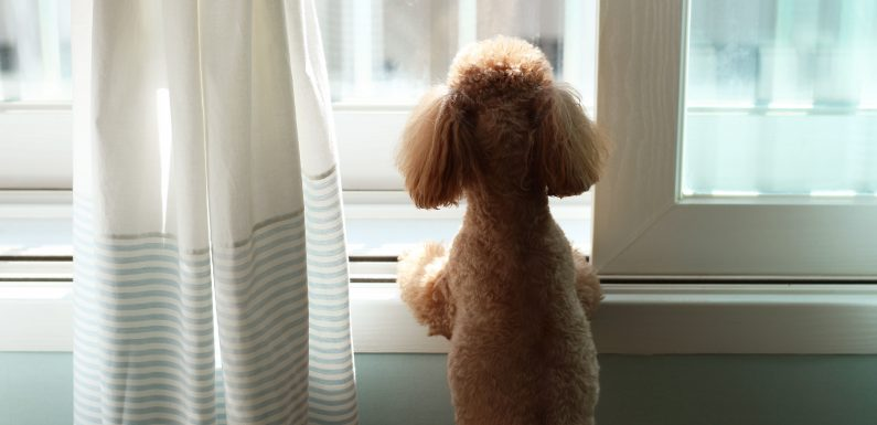 'No pets left behind bill' one step closer becoming a law