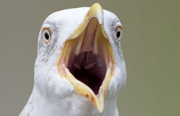 Man kills seagull in front of crying children after it stole one of his chips