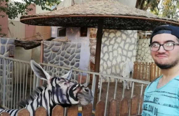 Zoo accused of painting stripes on a donkey to make it look like a zebra