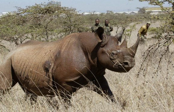Seven critically endangered black rhinos die in relocation 'disaster'