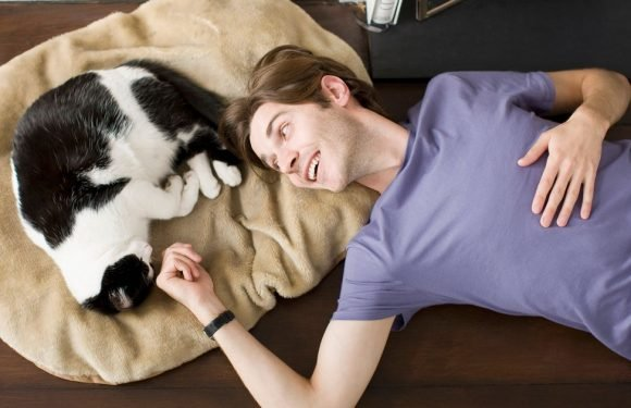 Parasite spread by cats could be the key to being a successful entrepreneur