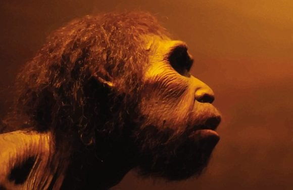 Neanderthal brains grown in a lab could be put into crab-like ROBOTS