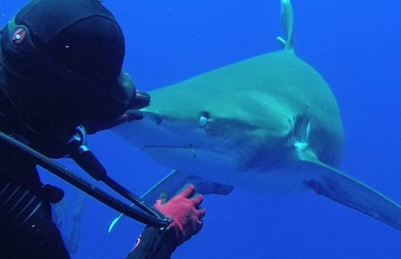 Incredible slow-motion video shows the moment a brave diver