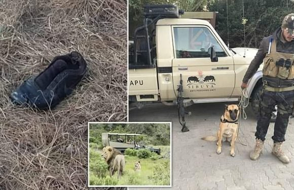 Single shoe is all that remains of poacher eaten by lions