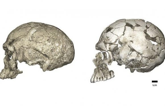 Humanity evolved right across Africa and not just in one region
