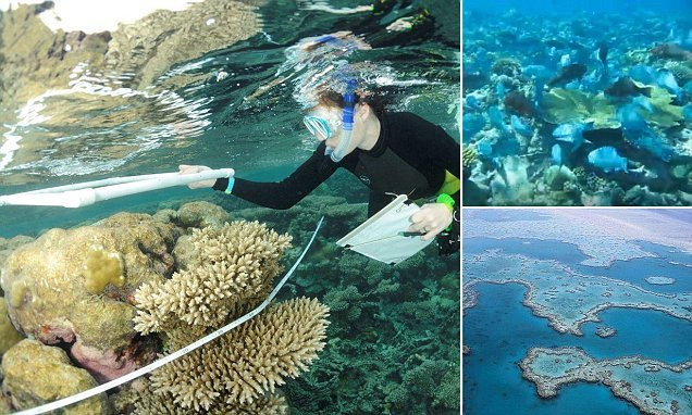 Rats on remote tropical islands could DESTROY coral reefs