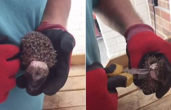 Father and daughter duo help free hedgehog from plastic