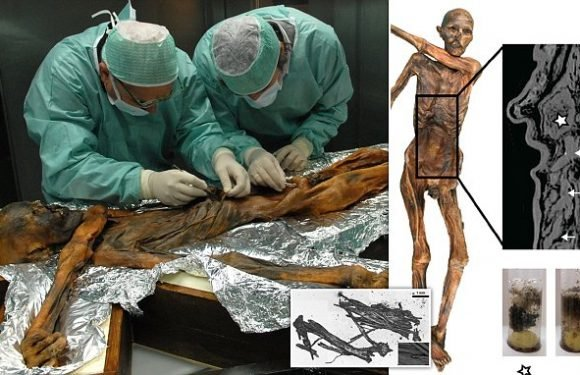 5,300-year-old Iceman feasted on a high-fat diet of Ibex meat