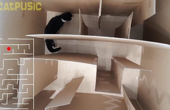 Man builds his cat a cardboard maze with three feet high walls