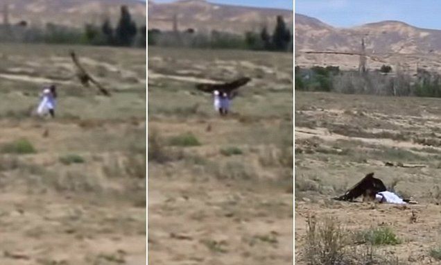 Horrifying moment eight-year-old girl is attacked by a golden eagle