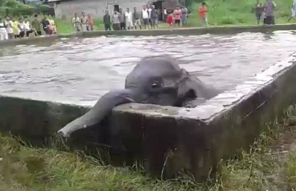 Baby elephant desperately tries to pull itself out of a water tank