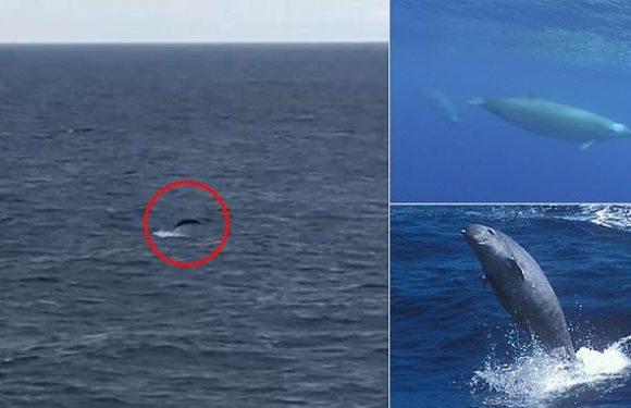Rare whales spotted for only the third time in the North Atlantic