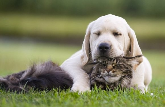 Study reveals that cats BULLY their canine friends