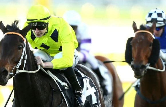 Lees hoping for twist in the tale before mare goes to breeding barn