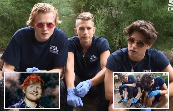 The Vamps reveal they gave Ed Sheeran album advice as they meet meerkats in Celebs Gone Wild video
