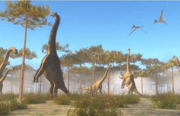 Study Into Dinosaurs' Diet Reveals Sauropods Didn't Need To Gorge On Plants After All