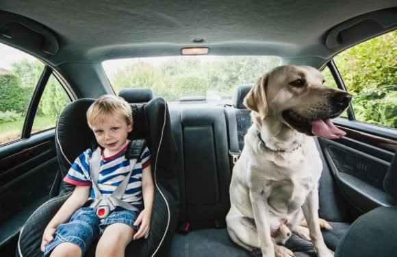 What you're legally allowed to do to save a dog or child from a hot car