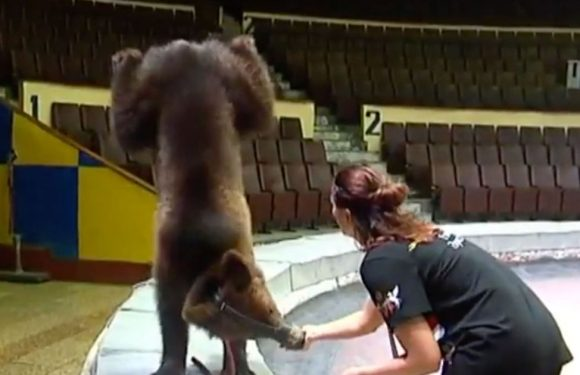 England fans walk out of Russian circus in disgust as bears forced to dance