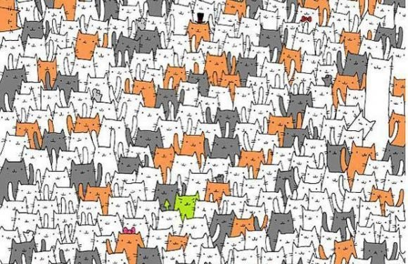 Can you spot the bunny hidden among the cats? Tricky puzzle is sure to leave you baffled