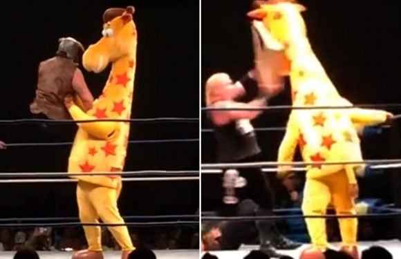 Is this bizarrest moment in wrestling history as Toys R Us Geoffrey The Giraffe is eliminated from 30-man rumble… by Amazon package